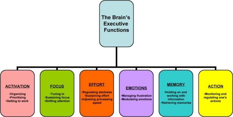 executive-functioning-graphic