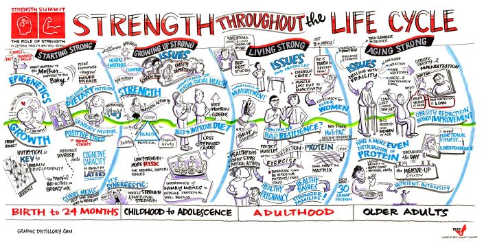 strength throughout lifecycle