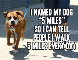 funny-5-miles-dog-walking
